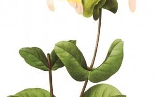 Поздравления по цветочному гороскопу Лотос смс