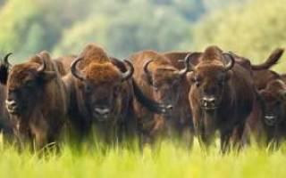 Всемирный день дикой природы 2020 — 3 марта