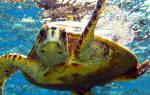 Всемирный день черепахи — 23 мая 2020