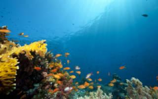 Всемирный день океанов 2020 — смс поздравления