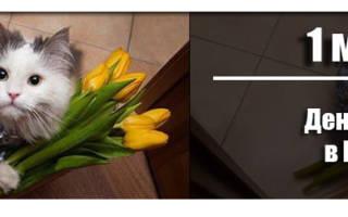 Когда День кошек 2020 — 1 марта