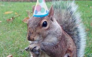 Пожелания с днем рождения дяде