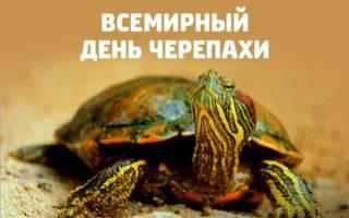 День черепах 2020 — стихи, проза, смс