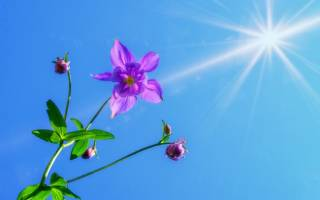 День летнего солнцестояния — смс поздравления